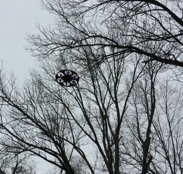 The Drone in flight. No, it is not in the trees and yes, the previous day, it did miss a car. That said, Calla is fast becoming very proficient and skilled in guiding her Drone. The rumor that it can airlift Henry-the-Dog whose sight is failing anywhere Henry would like to go are untrue.